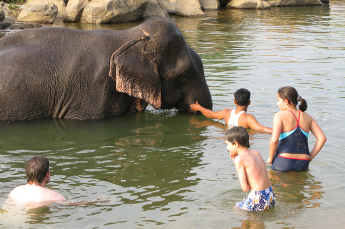 Family swimming with elephant