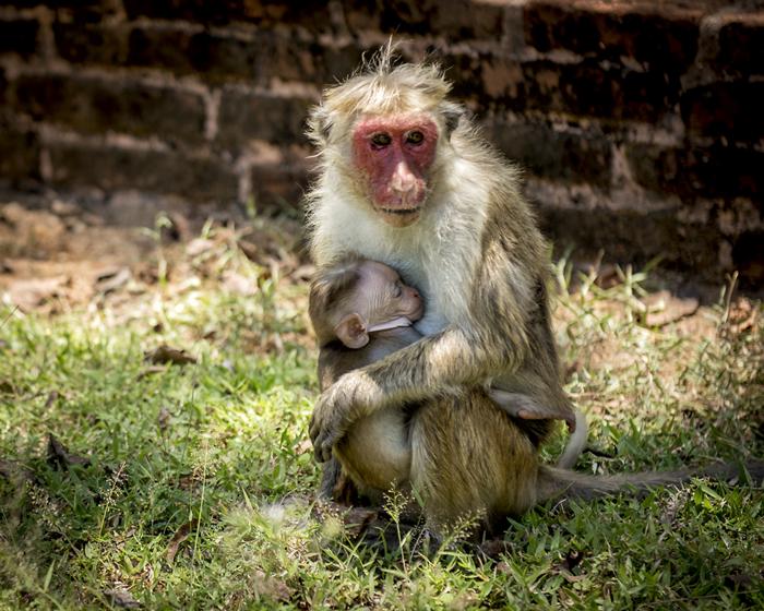 Monkey - wildlife