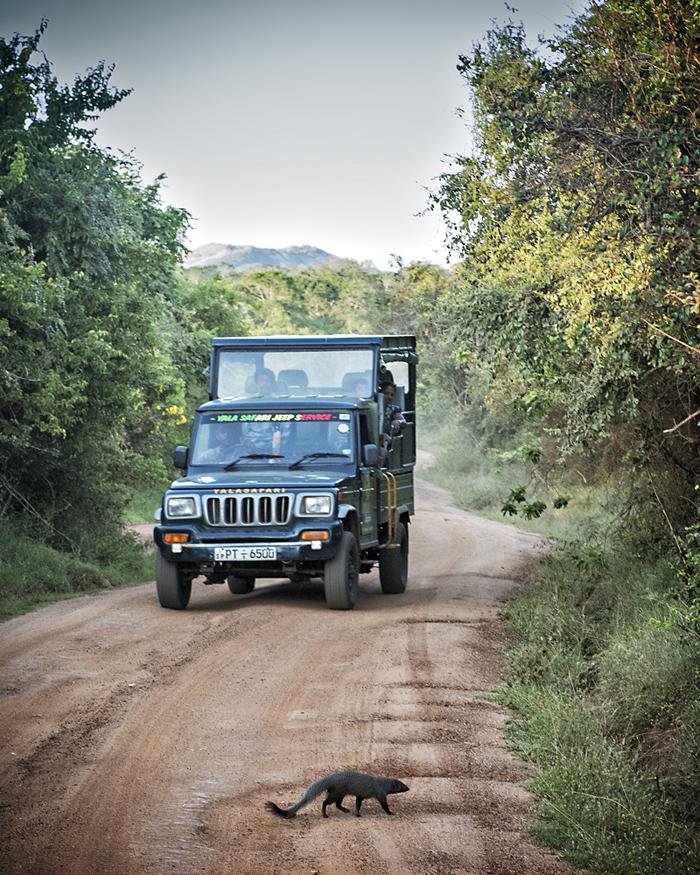 Yala Jeep Safari, Sri Lanka